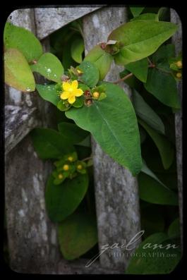 Flowers1-GailAnn